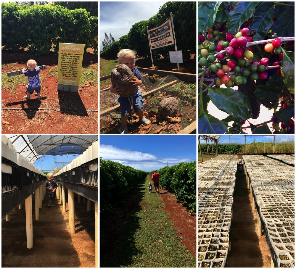 Visiting the Kauai Coffee Company