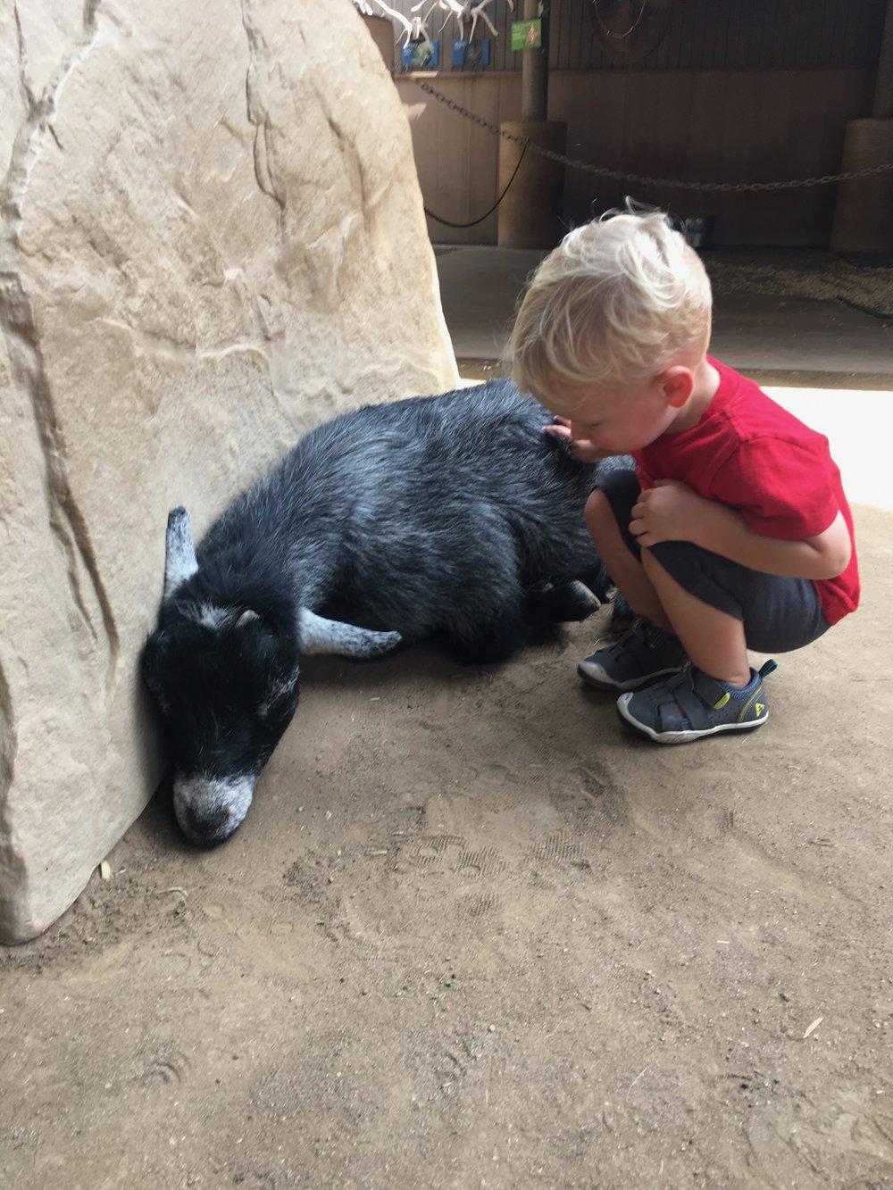 San Diego Zoo: Petting Zoo