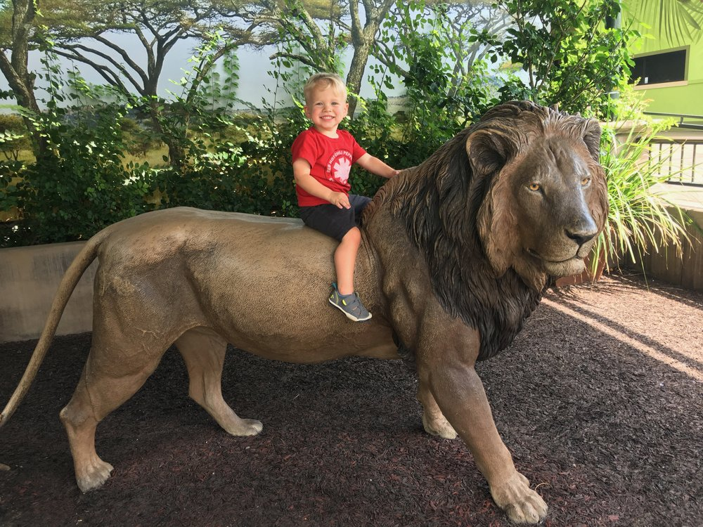 San Diego Zoo: Riding the Lion