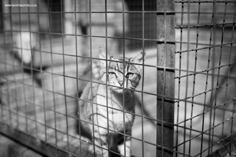 Tshwane SPCA0009.jpg