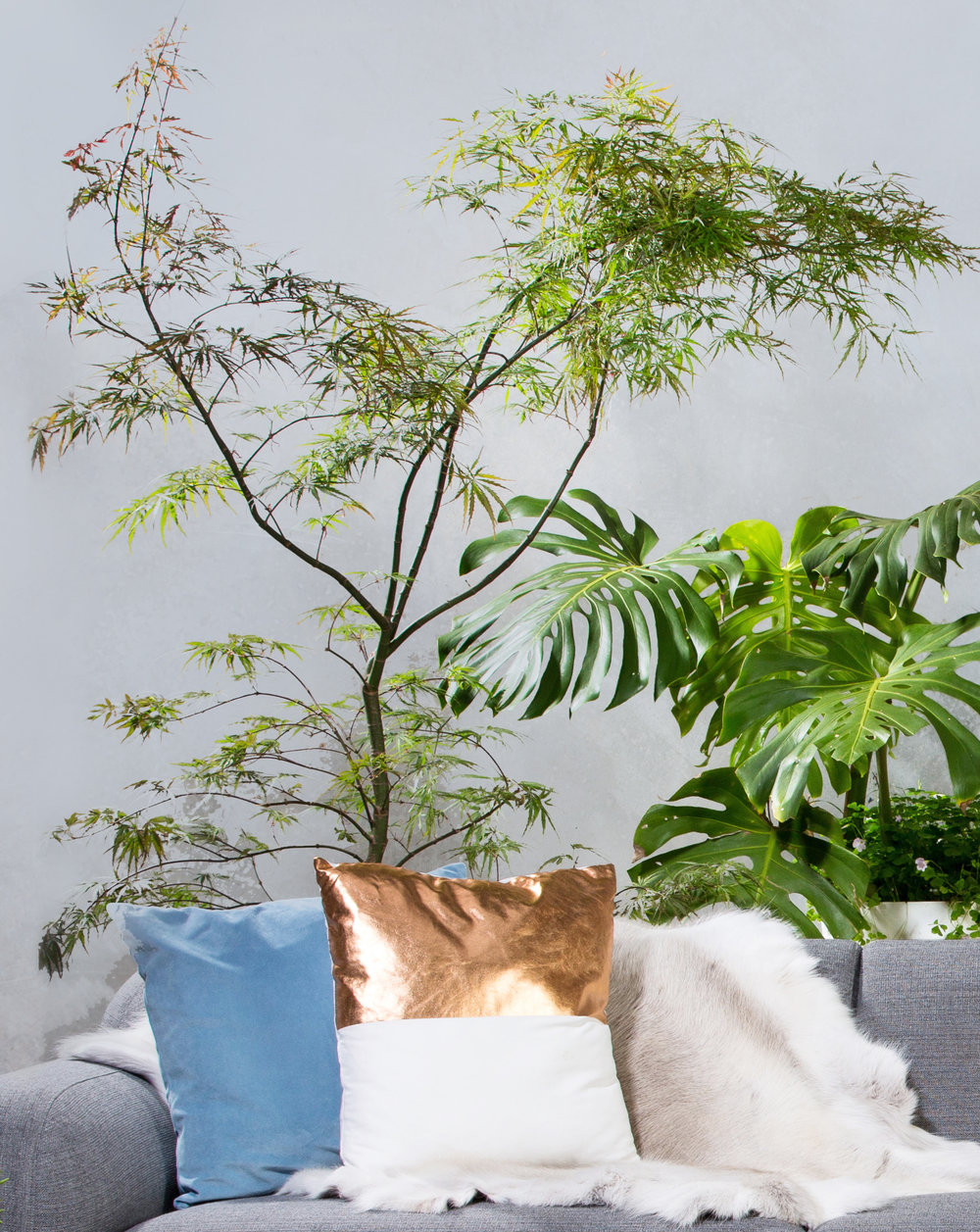 cushion:tree:highrescloseup.jpeg