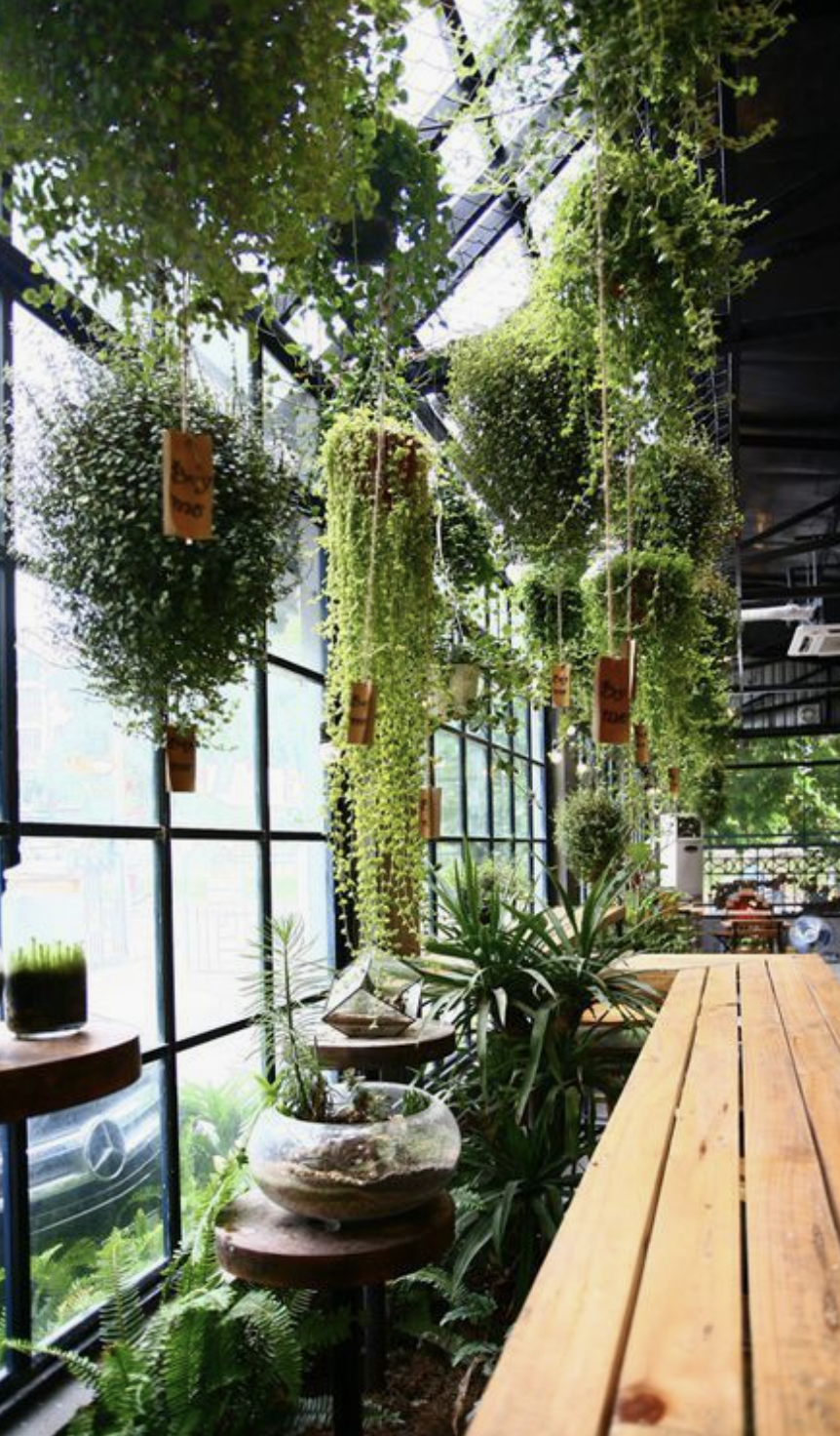 Interior Atriums - We can work with you in your exisitng space or with your builder/Architect on the design and incorporation of your own interior atrium garden. We work with specialised atrium horticulturists in creating that perfect climate conditions for your space. We encourage atriums as a consideration for those looking to inorporate a space for meditation, yoga or just simply to enjoy feeling connected to mother nature.