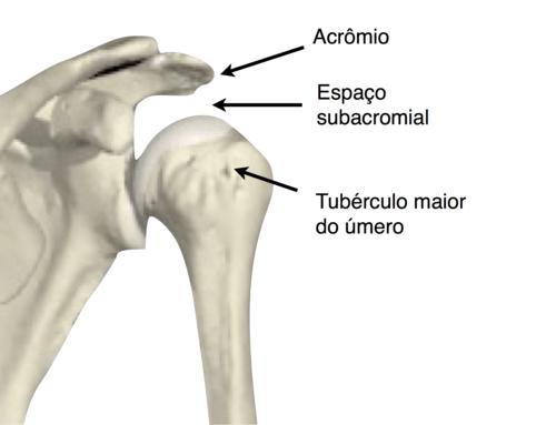 Anatomia do ombro e espaço subacromial