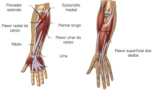 epicondilite_medial_Anatomia.jpg