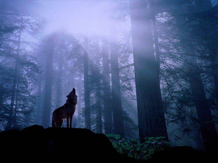 woodswolf.jpg