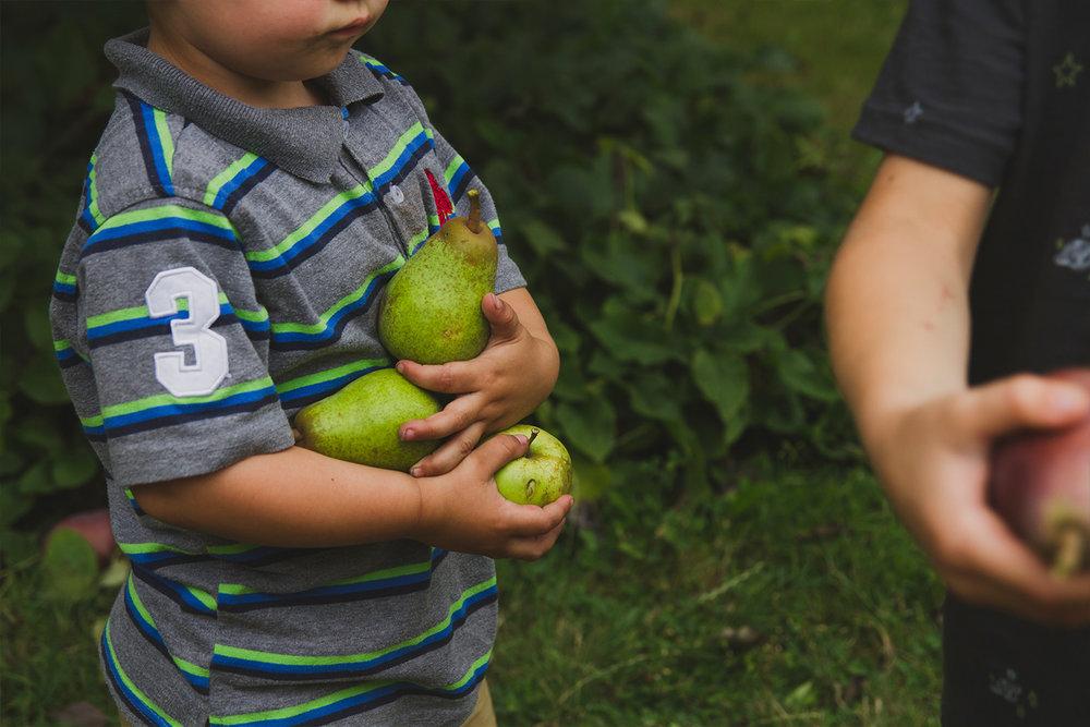 pears4.jpg