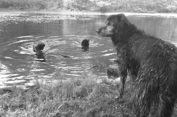 dogs swimming at Whipple Hill.jpg