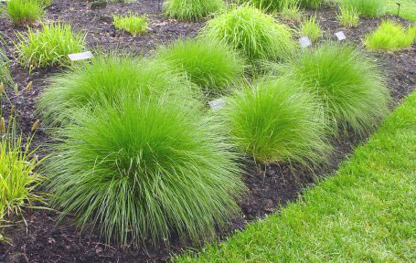 Perennials and Grasses