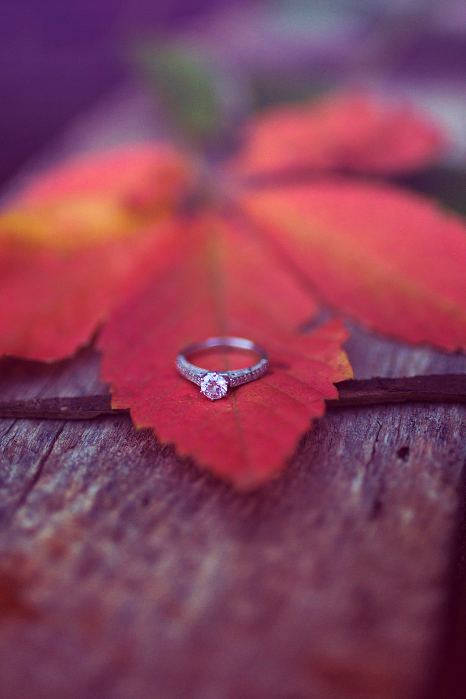 Henness Engagement 596 (2).jpg