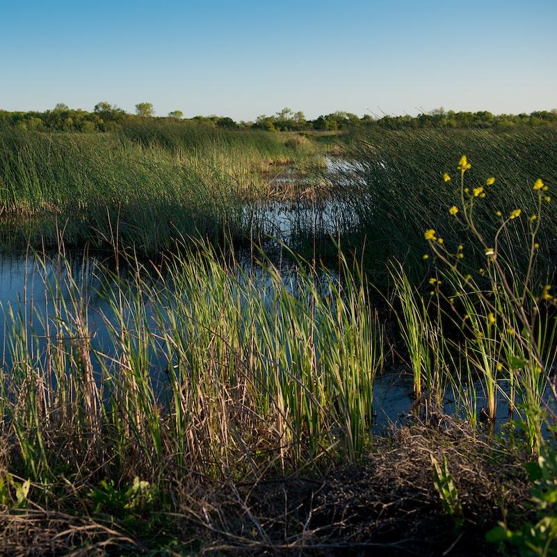 FL_Wetlands-5231.jpg