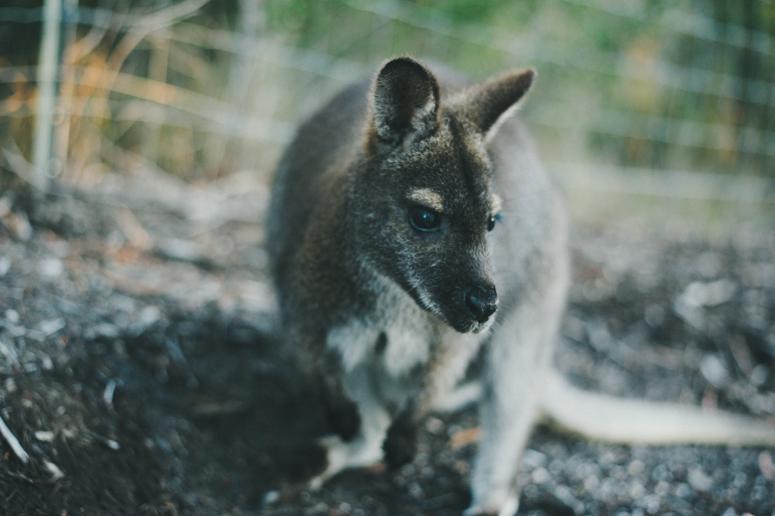 Tasmania 2013 -179.jpg