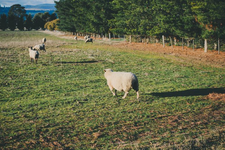 Tasmania 2013 -200.jpg