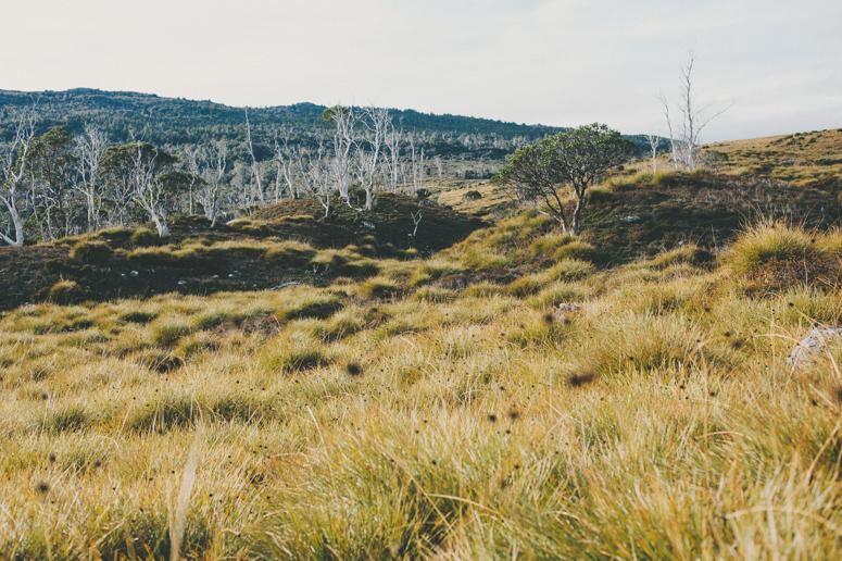 Tasmania 2013 -256.jpg