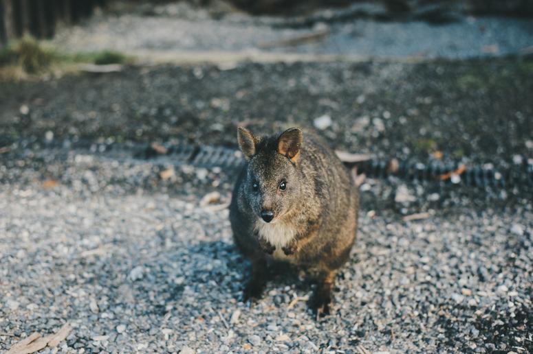 Tasmania 2013 -207.jpg