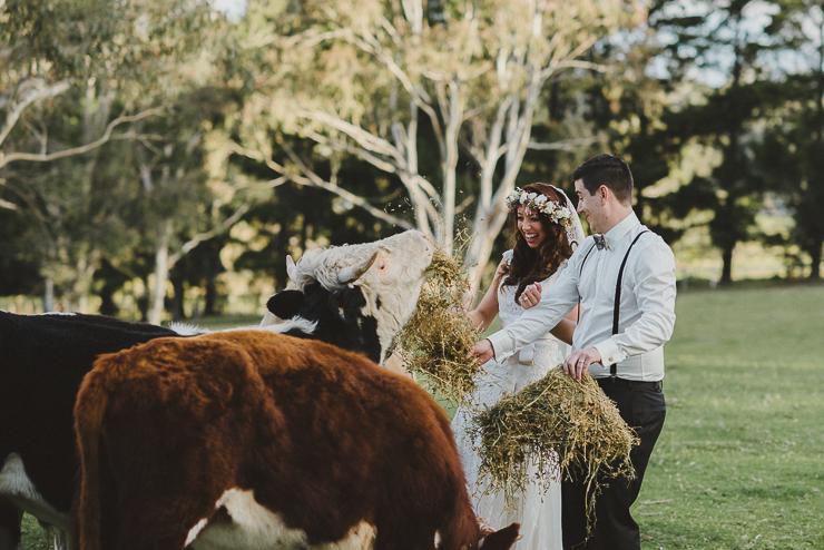 Natalie & Adam Blog cows-1.jpg
