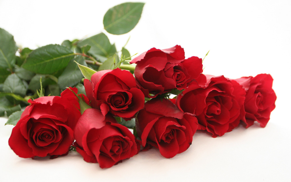 flowers_beautiful_best_quality_roses-10.jpg
