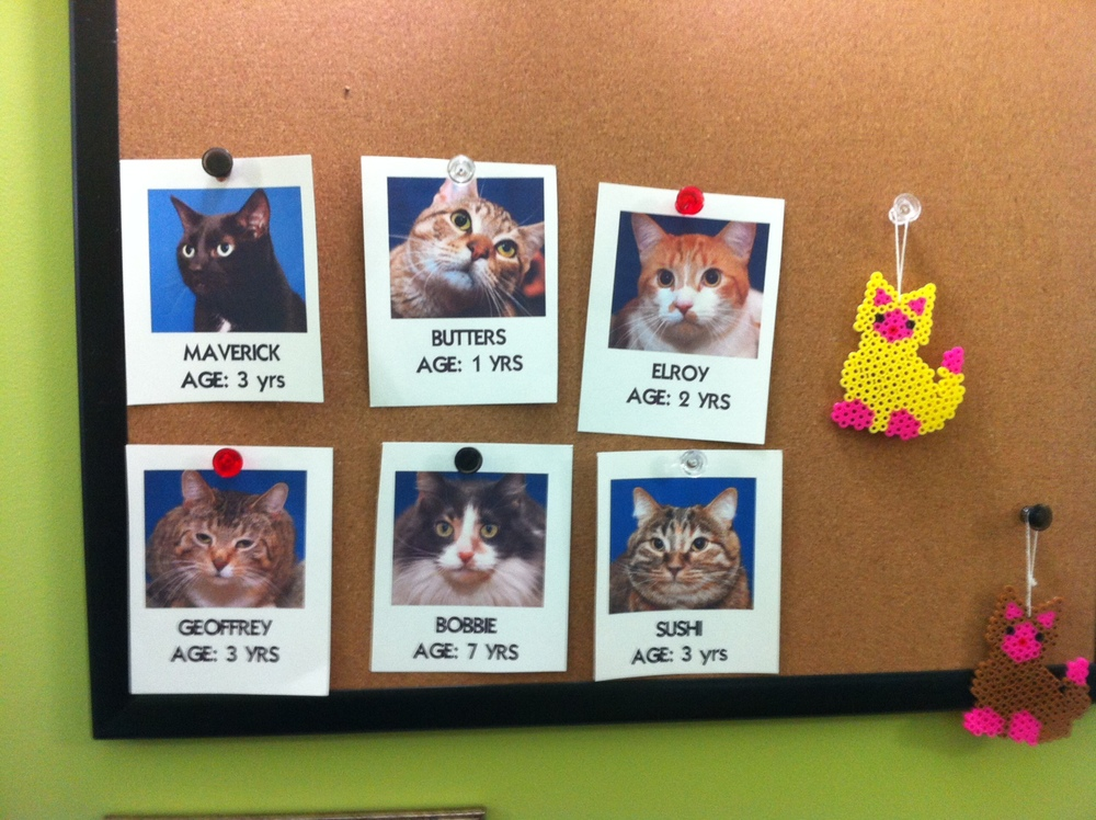 Some cute cats just waiting to find their new home!