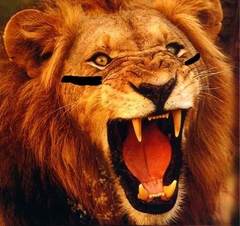 RAWR LIONS RAWR.jpg