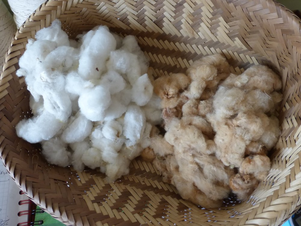 Cotton Ready for Spinning