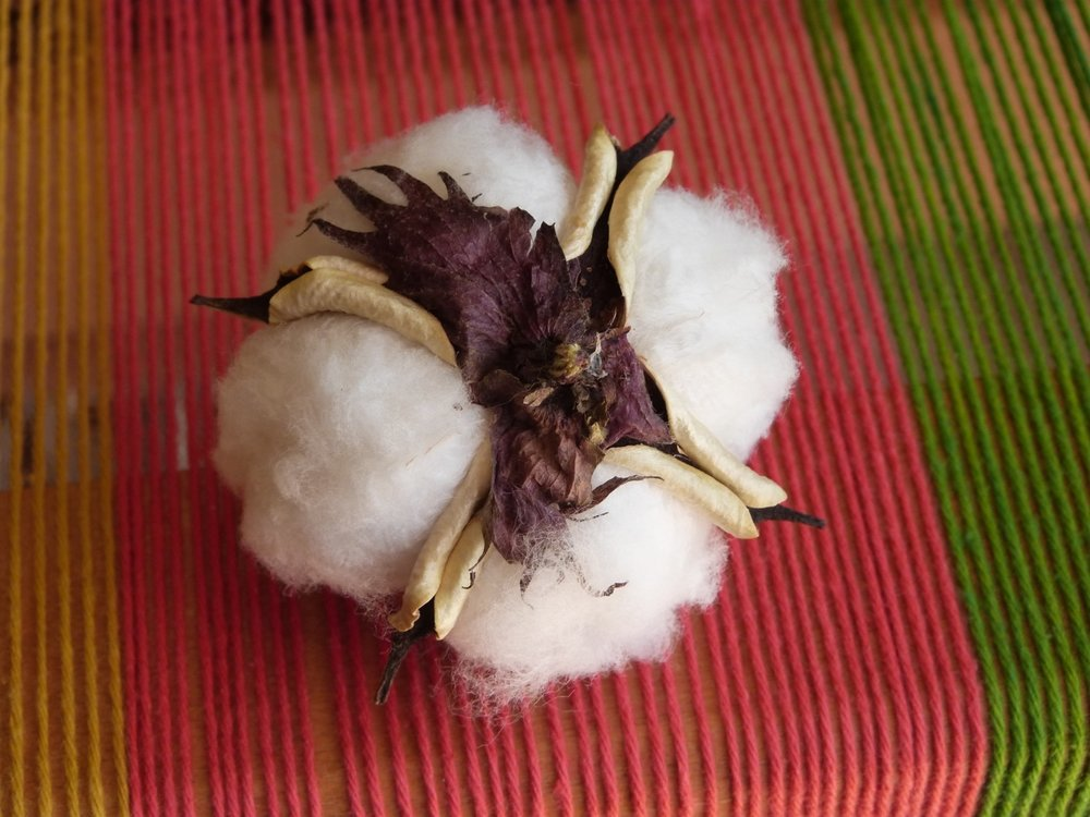 You can see from the back that this cotton came from the Virginia dark colored plants.