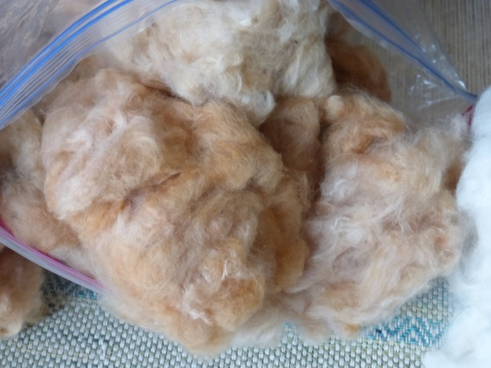 This is the Virginia brown cotton. It has a silky texture and is more reddish/orange than the Ecuadorean cotton.