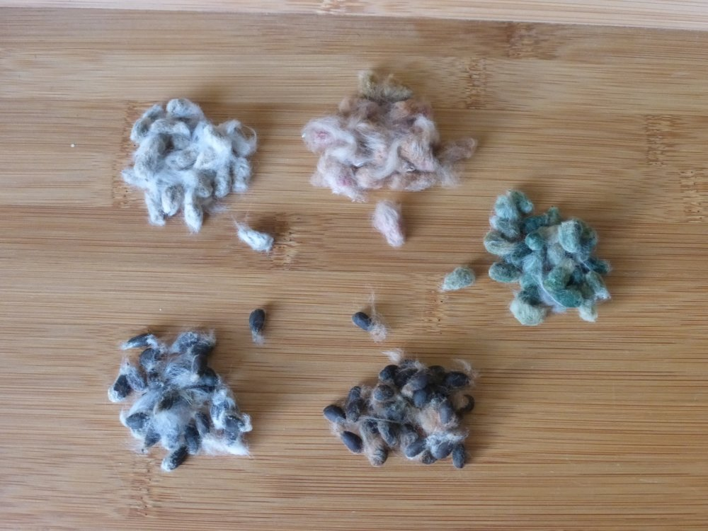 An overview of the 5 kinds of cotton seeds I have planted.