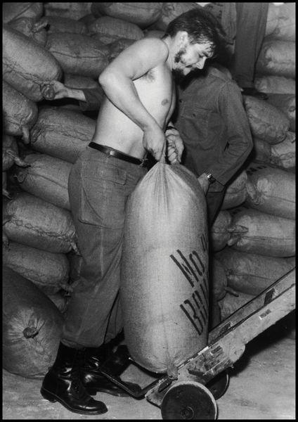 Che working in Sugarmill