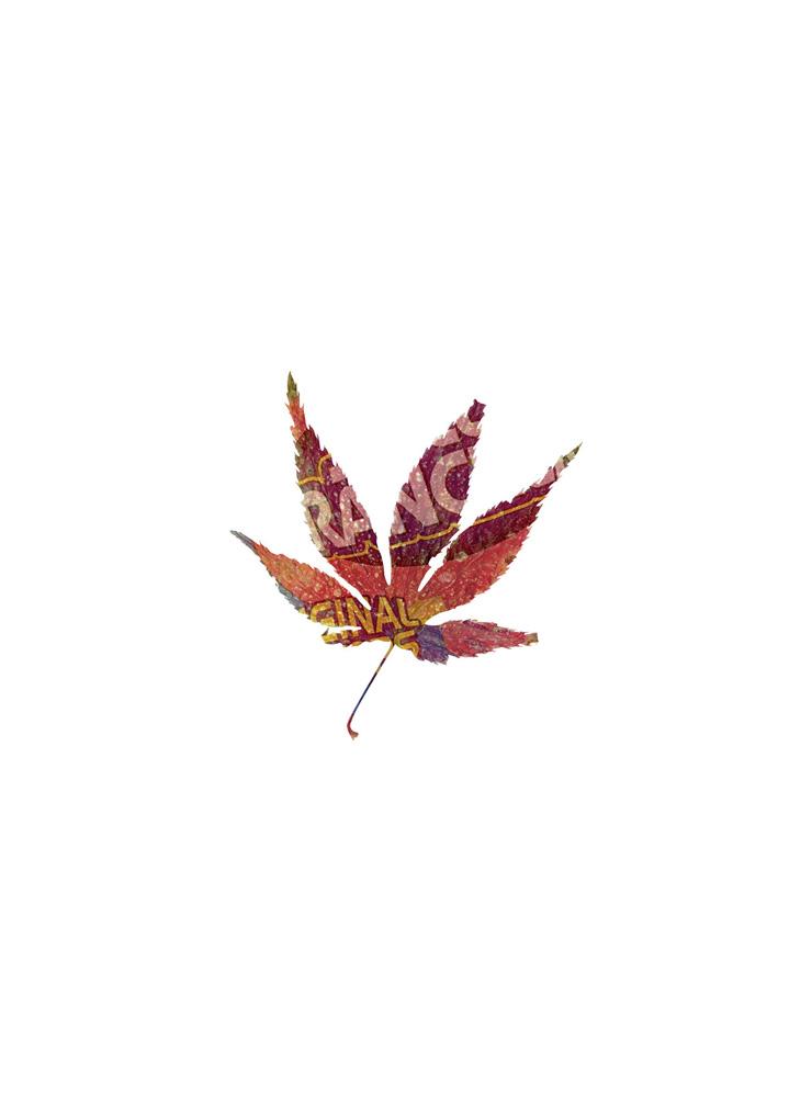 IX, Muestrario de hojas, Botánica: nuevas especies, 2012