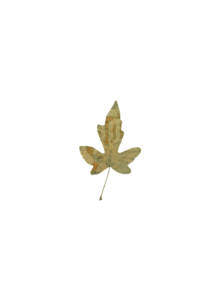 V,  Muestrario de hojas, Botánica: nuevas especies, 2012