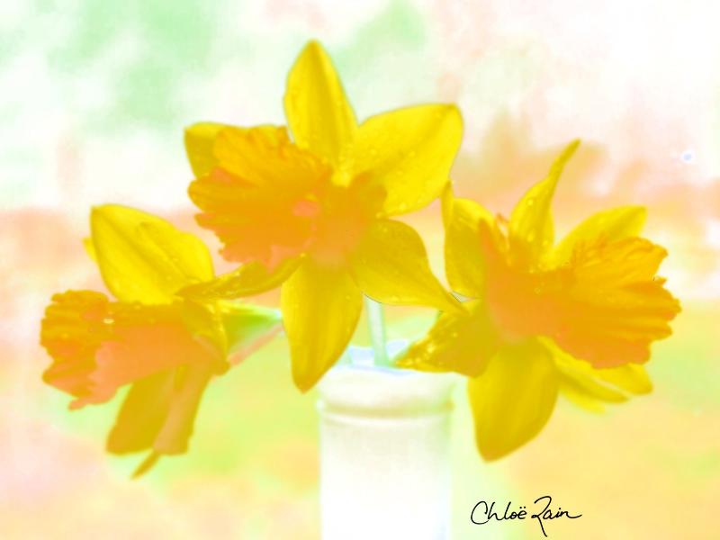 chloe rain explore deeply spring rain daffodils