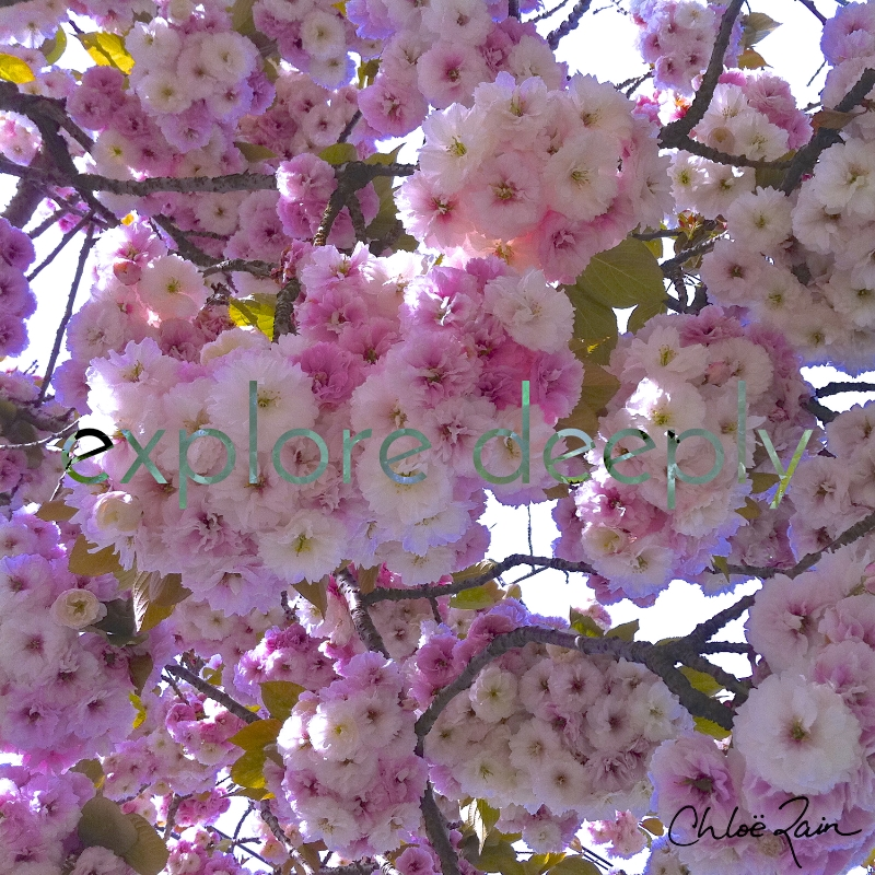 explore deeply spring blossoms love life inspirational quotes beauty