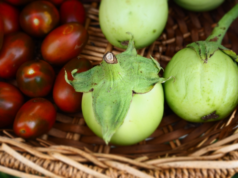 White Eggplant Farmers Stand Explore Deeply Chloe Rain Organic Vegtables