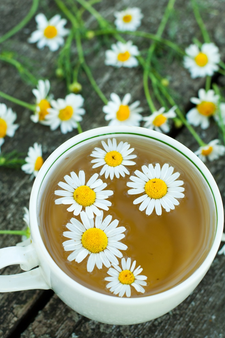 Explore Deeply Organic Herbal Tea