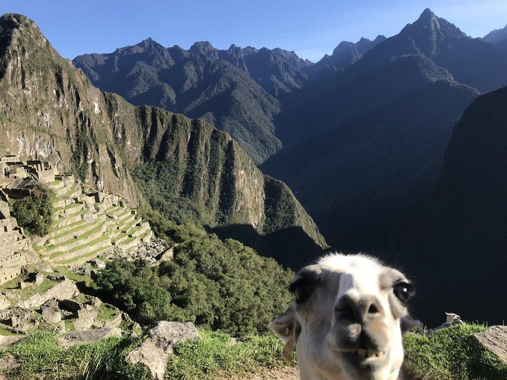 Llama bomb, Machu Picchu