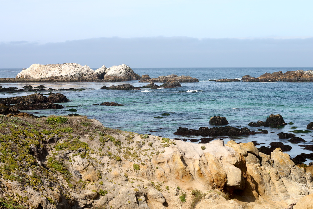from the 17 mile drive