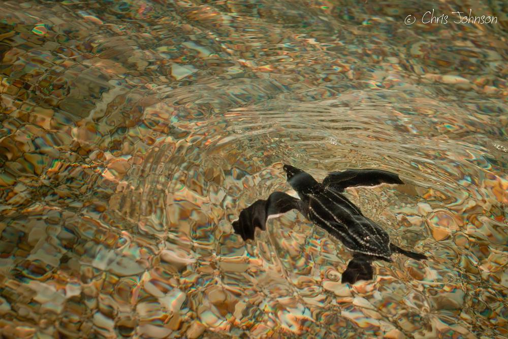 turtleimages_ (1 of 1)-2.JPG