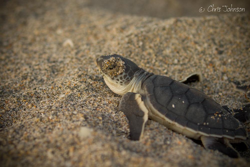 turtleimages_ (1 of 1)-14.JPG