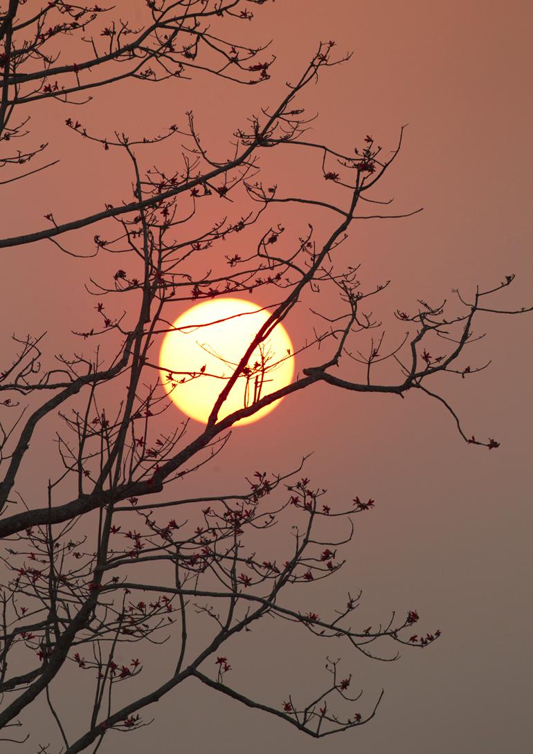 Silk Cotton Tree sunset, Kaziranga NP, Feb 2011