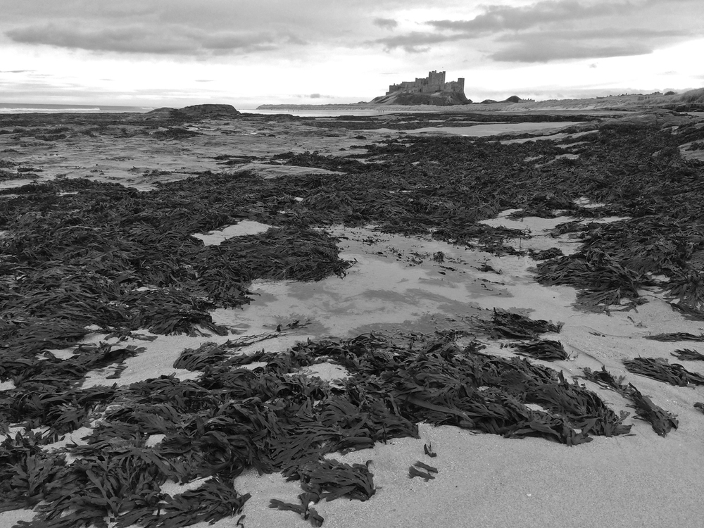 Bamburgh Castle from Stag Rocks