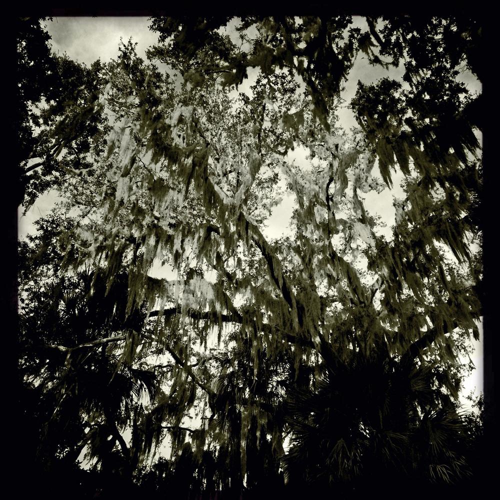 Live Oak, Titusville FL