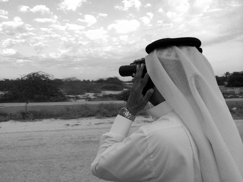 Birding Bahraini-style! Abdullah checks the hypocoliuses.