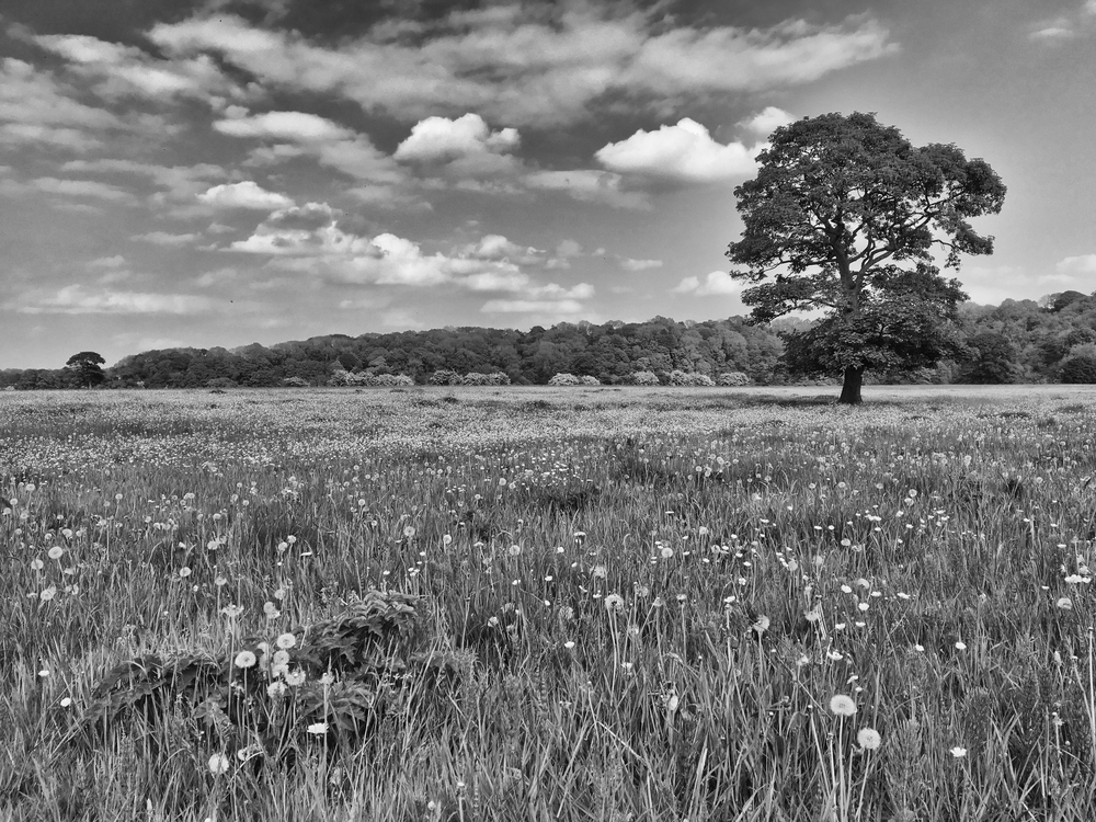 Lovely riverside meadows in the Ribble Valley at Alston.