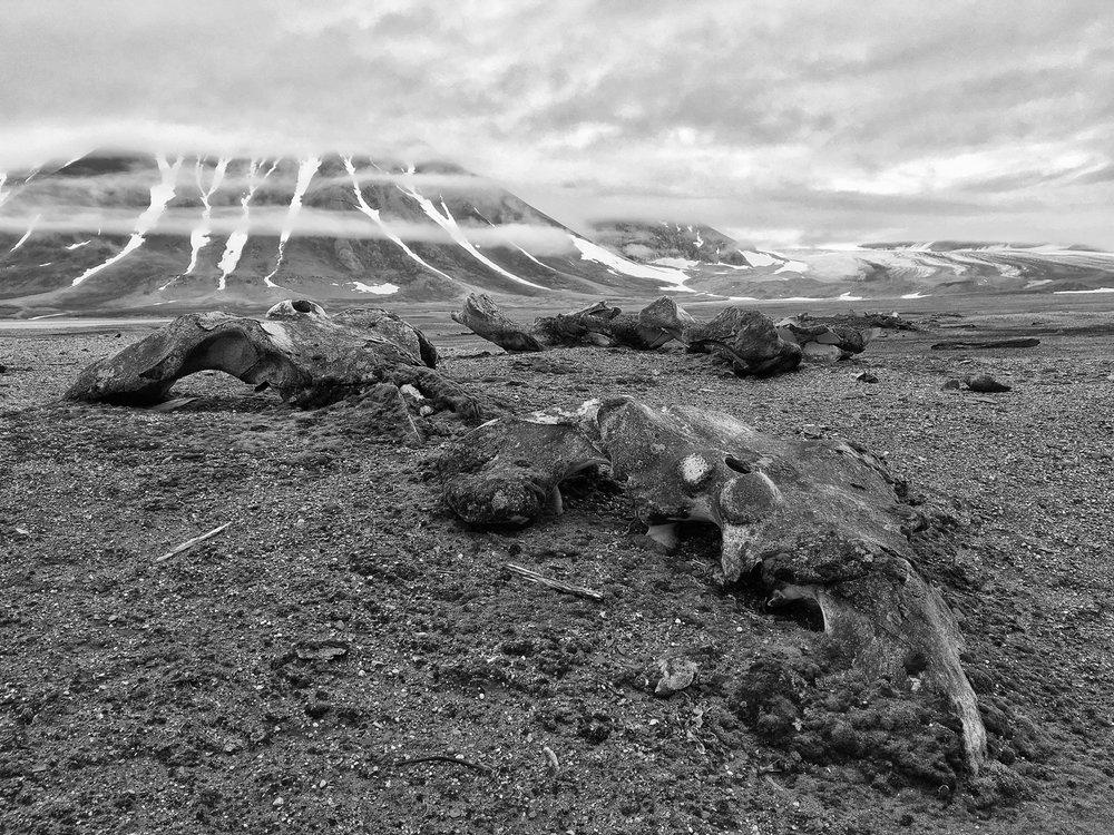 Gåshamna, Svalbard July 2016