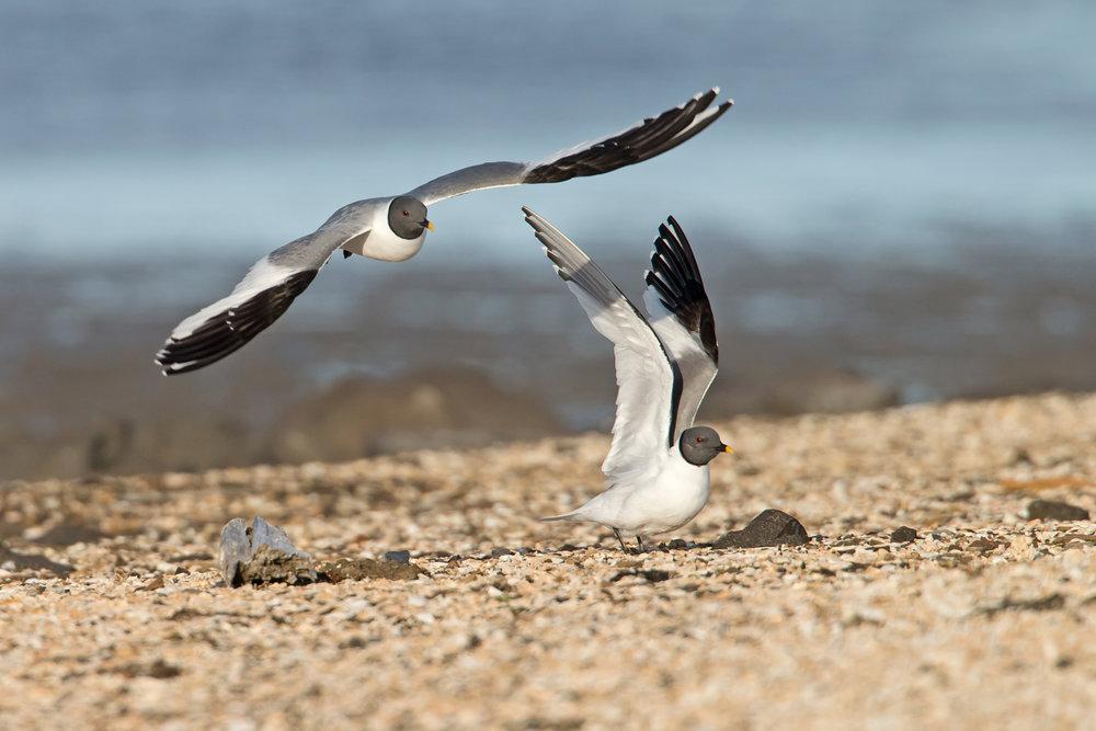 SPITSBERGEN: A POLAR WILDERNESS 2018 (BIRDQUEST/WILD IMAGES)