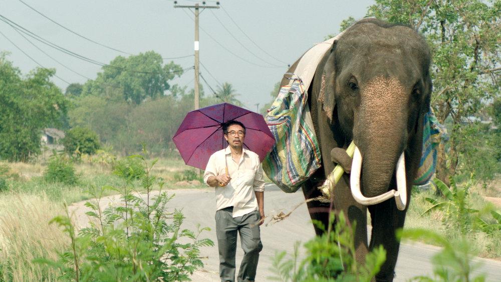 POP_AYE_elephant.jpg
