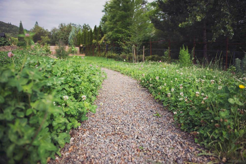Gravel Path with Steel Edging Through Clover Meadow