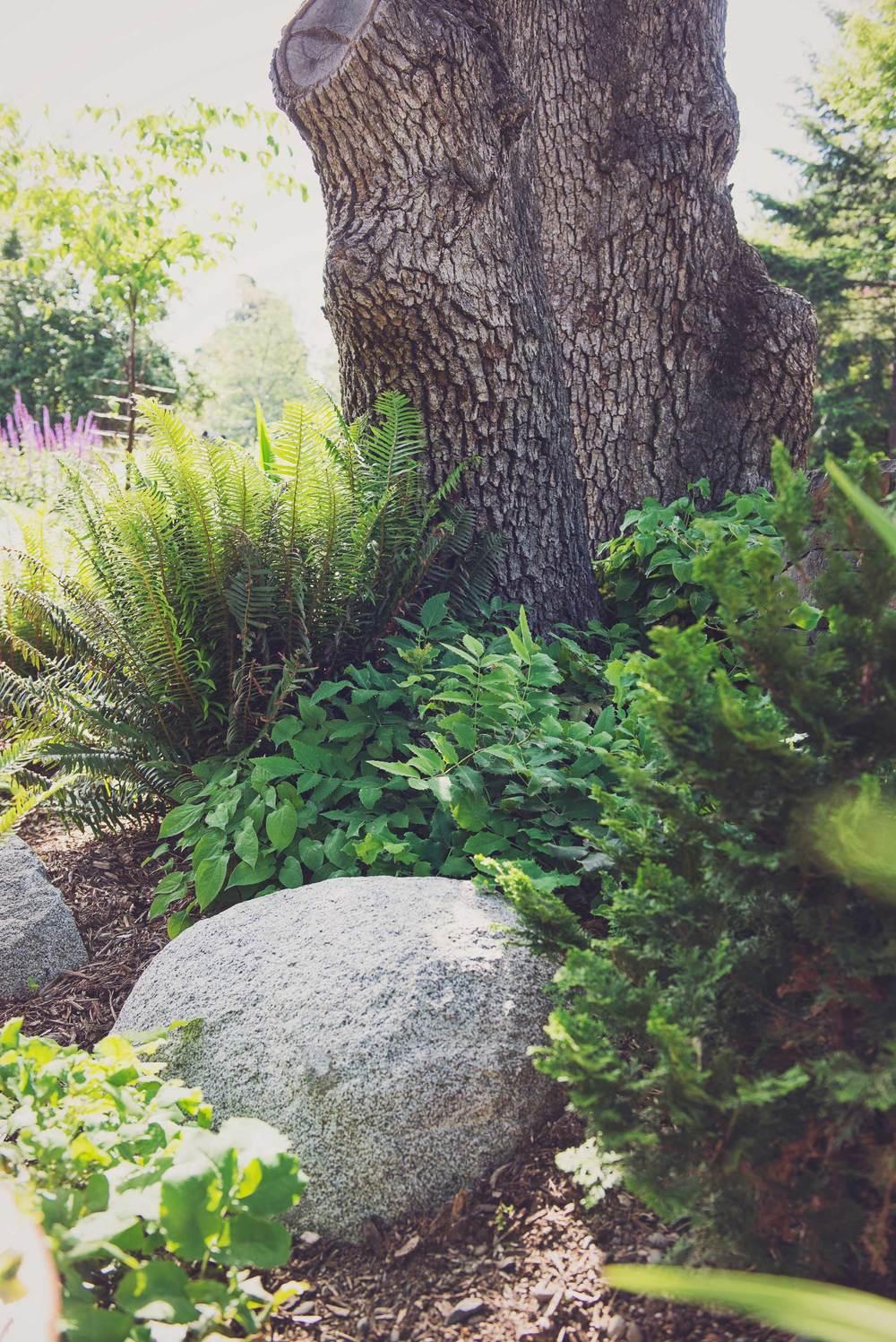 Oregon Native Landscaping