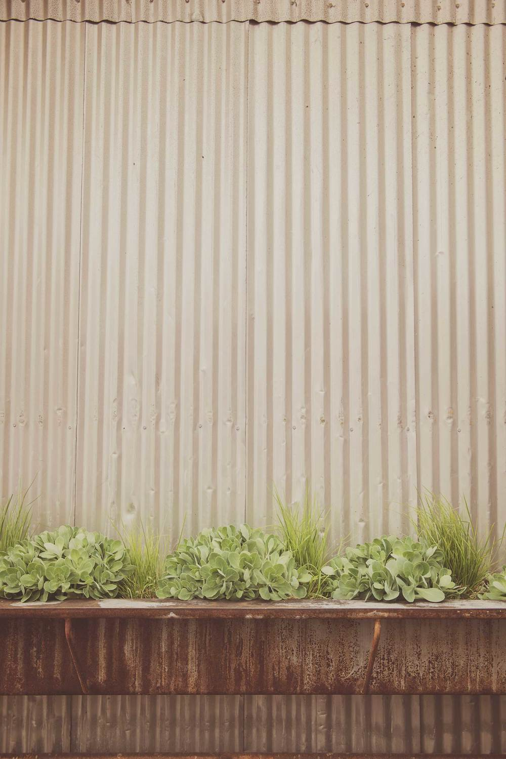 Salvaged Industrial Container with Drought-Tolerant Plantings