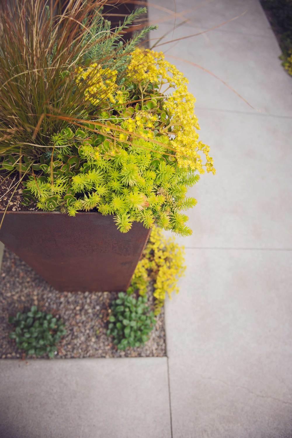 COR-TEN Steel Planter Design with Drought-Tolerant Succulents and Bronze Sedge in Medford.jpg