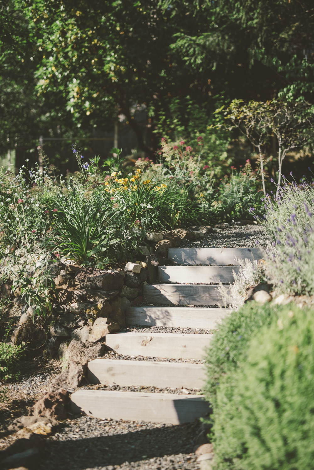Timber Garden Steps Through Blooming Landscape of Drought-tolerant Plantings.jpg